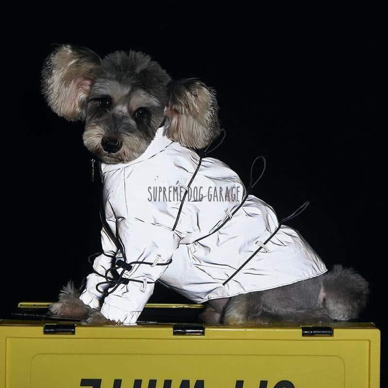 reflective dog jacket
