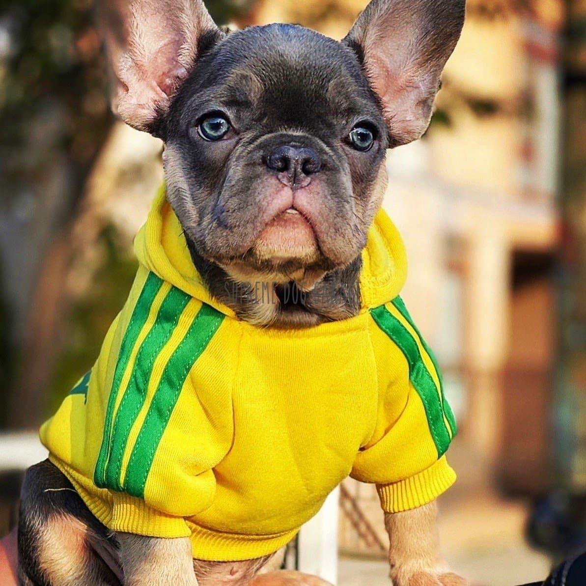 adidog dog clothes