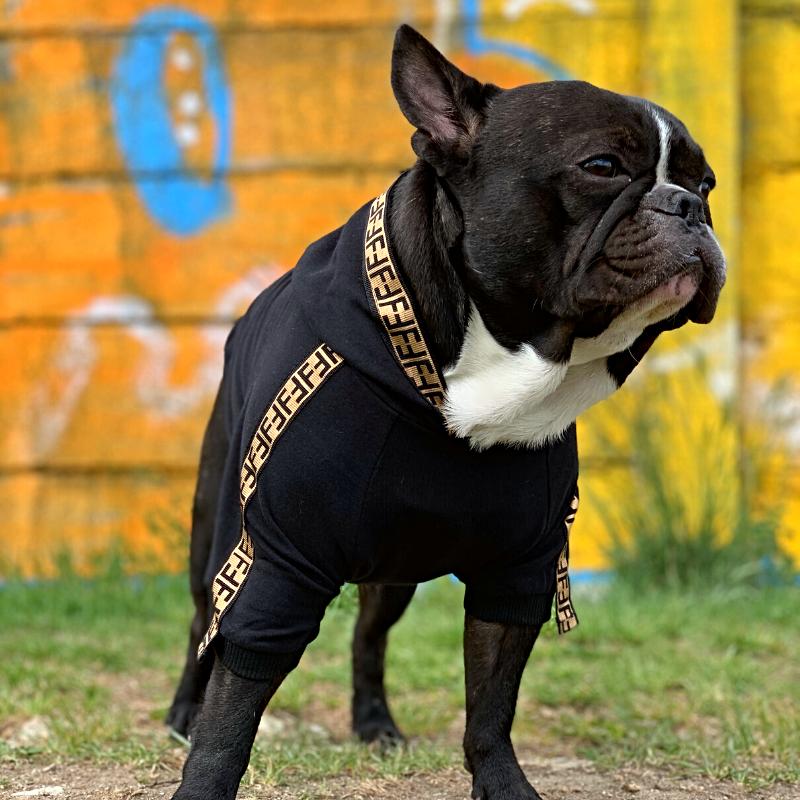 fendi dog hoodie
