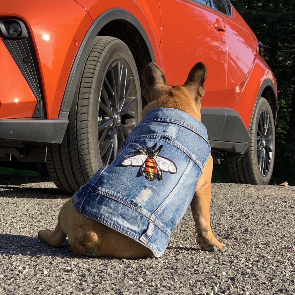 denim vest for dogs