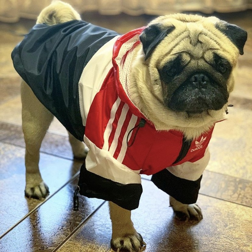 adidas clothes for dogs