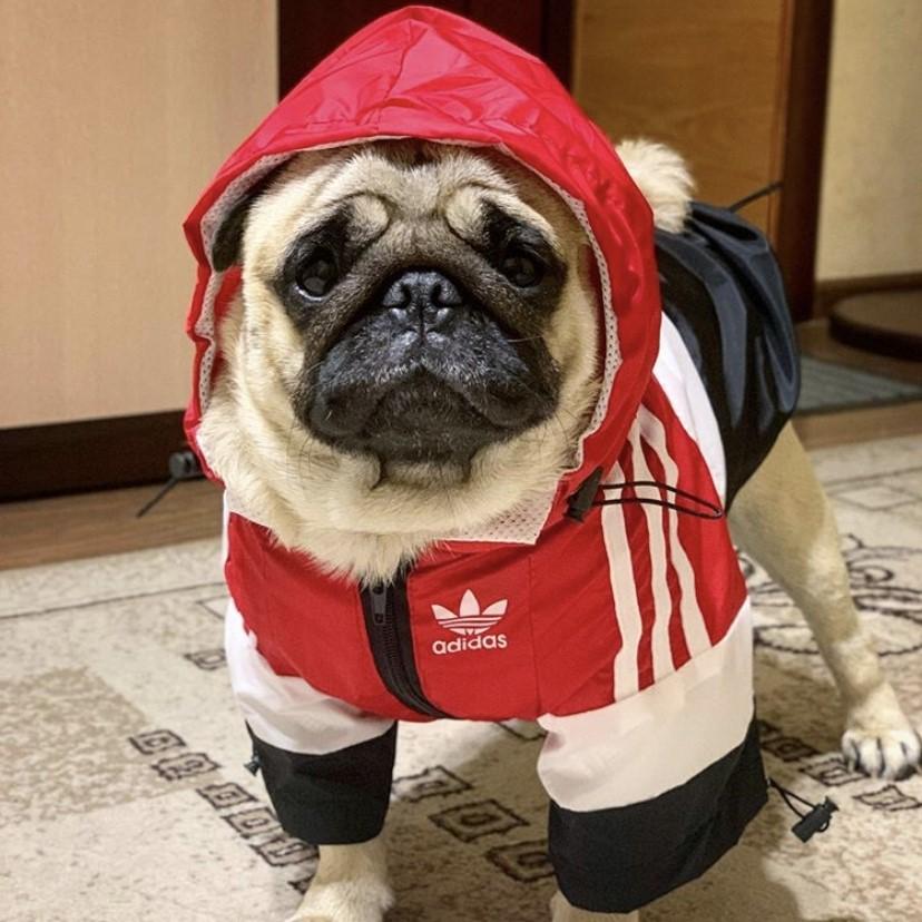 Adidas Dog Jacket - Dog Windbreaker Jacket | Supreme Dog Garage